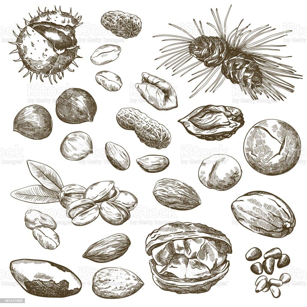 nut set vector art illustration