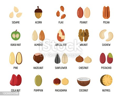 Nut types ith signed names icons set. Flat illustration of 20 nut types ith signed names vector icons for web