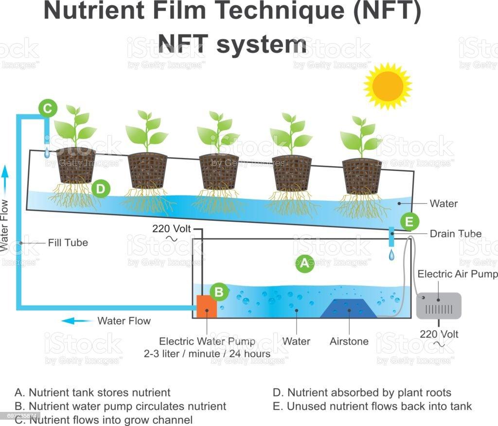 Nutrient film technique is a hydroponic technique. Education info graphic vector. vector art illustration