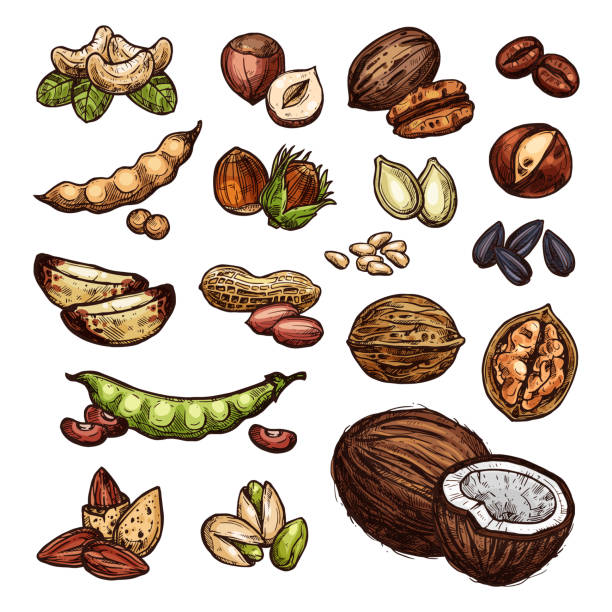 illustrazioni stock, clip art, cartoni animati e icone di tendenza di nuts and bean seeds vector natural sketch - coffee farmer