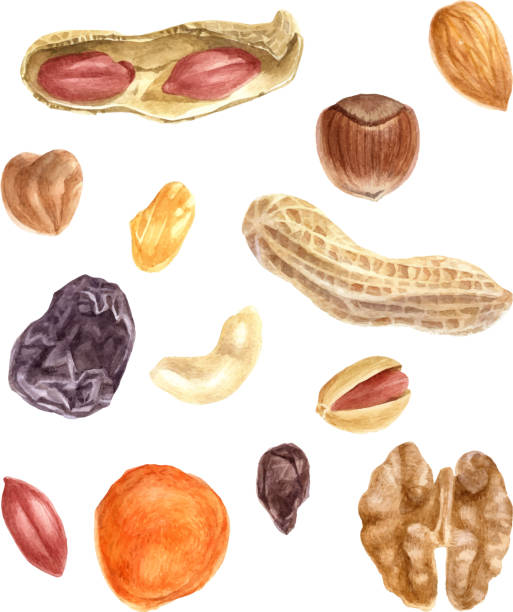 nüssen und getrockneten früchten aquarell set - nuss stock-grafiken, -clipart, -cartoons und -symbole