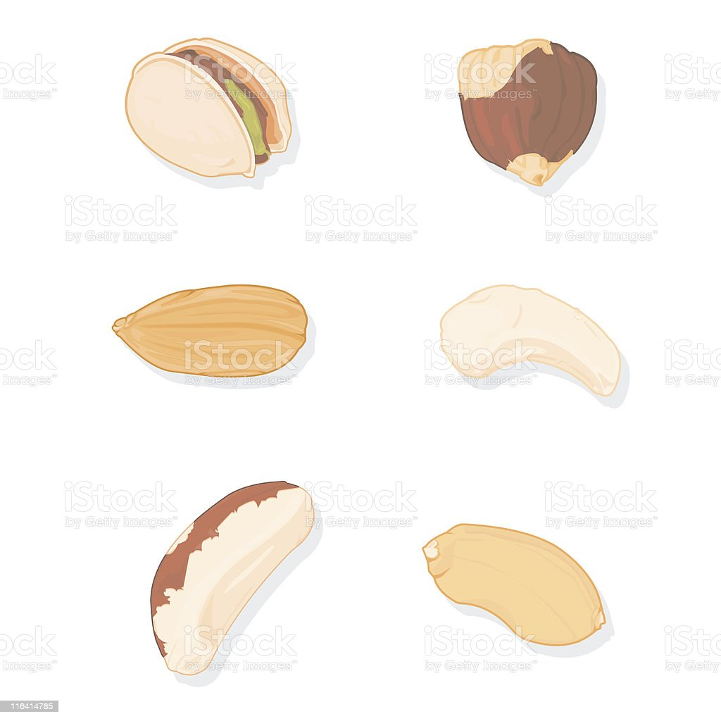 Nuts  and legumes vector art illustration