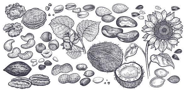 Nuts and seeds big set.