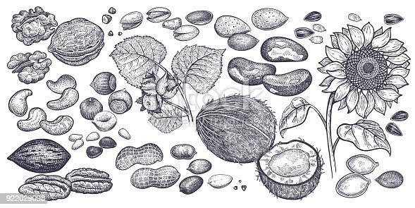 istock Nuts and seeds big set. 922029098