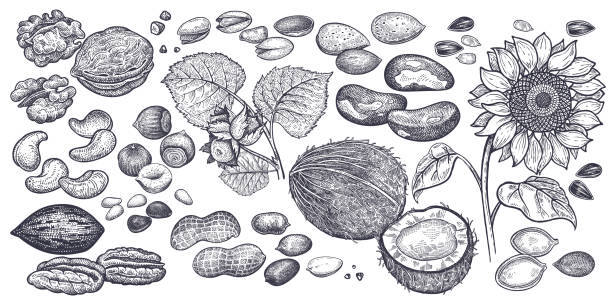 nuts and seeds big set. - nuts stock illustrations