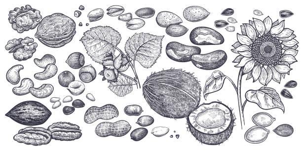 견과류와 씨앗 큰 집합입니다. - nuts stock illustrations