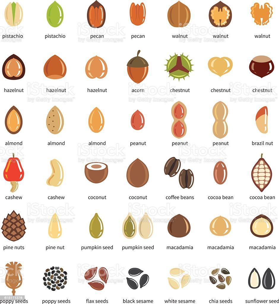 Nuts and seeds icon set vector art illustration