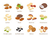 Nuts and seeds in flat design vector set of illustrations. Collection of nuts, seeds icons, infographic elements isolated on white background