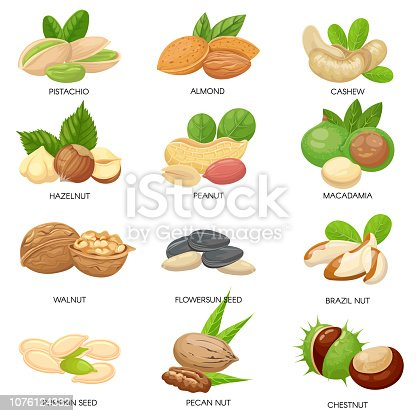 Nuts and seeds. Raw peanut, macadamia nut and pistachio snacks. Plant seeds, healthy cashew and sunflower seed. Almond, walnut and peanut vegetarian food isolated vector icons set