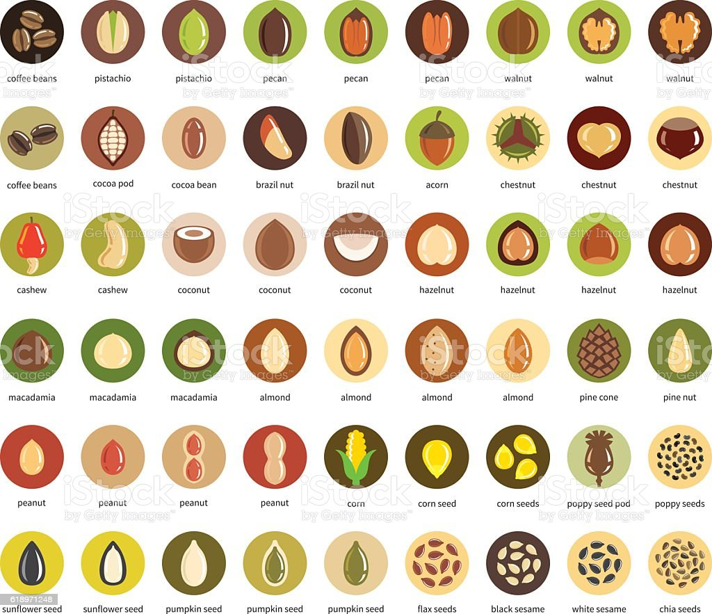 Nuts and seeds vector icon set vector art illustration