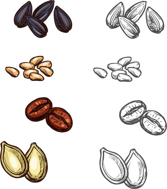Nuts beans and seeds vector sketch icons vector art illustration