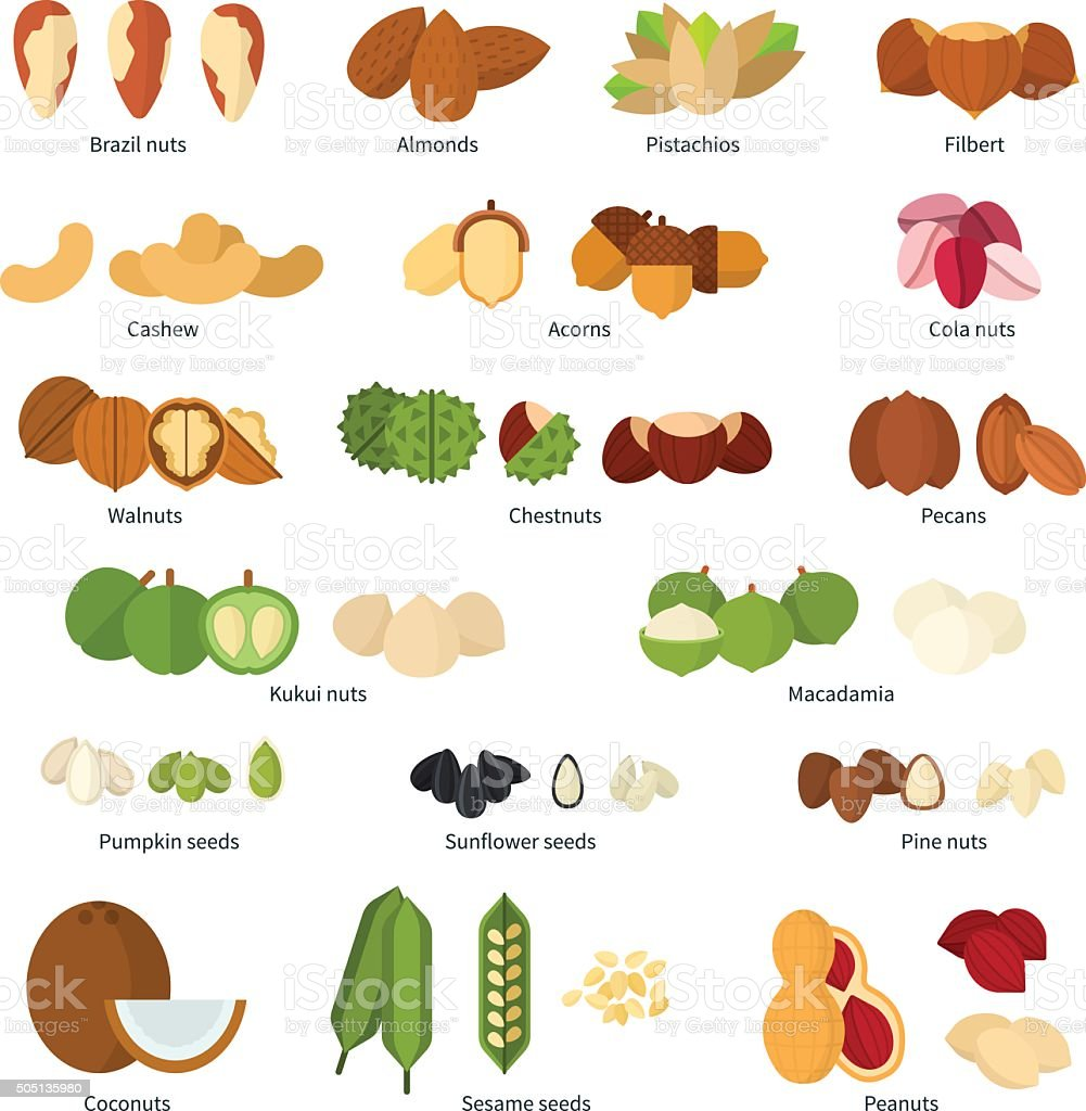 Nuts collection vector art illustration