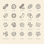 Nuts flat line icons set. Peanut, almond, chestnut, macadamia, cashew, pistachio, pine seeds vector illustrations. Outline signs for healthy food store.