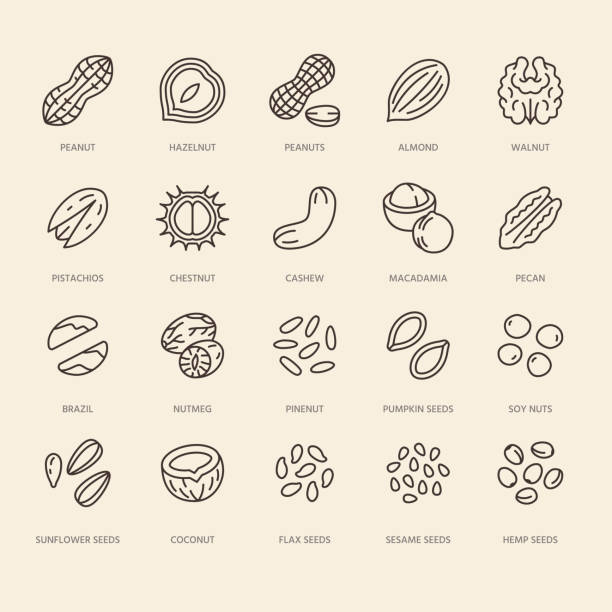 nuts flat line icons set. peanut, almond, chestnut, macadamia, cashew, pistachio, pine seeds vector illustrations. outline signs for healthy food store - nuts stock illustrations