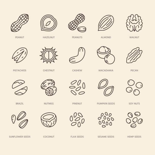 illustrations, cliparts, dessins animés et icônes de ensemble d'icônes de ligne plate de noix. illustrations vectorielles d'arachide, d'amande, de châtaigne, de macadamia, de noix de cajou, de pistache, de graines de pin. indiquez les signes d'un magasin d'aliments sains - fibre