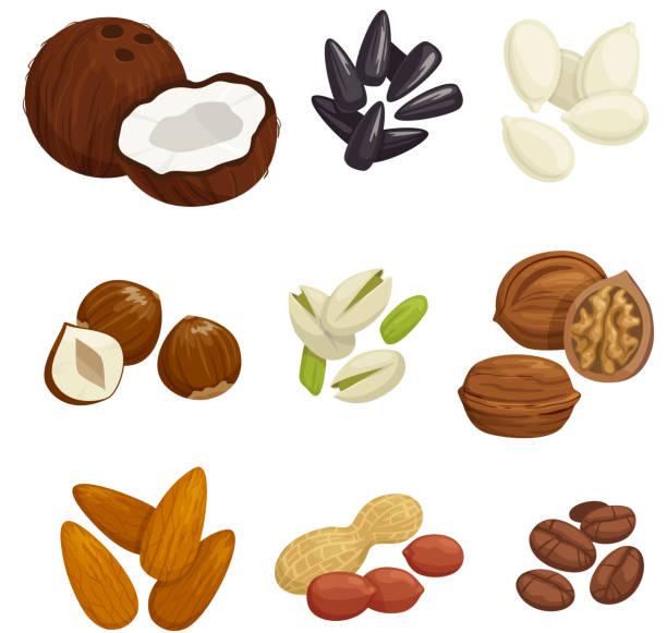 nuts, grain and kernels vector icons - nuss stock-grafiken, -clipart, -cartoons und -symbole