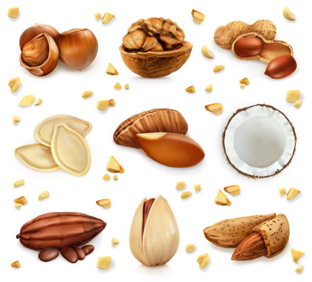 너트 쉘, 벡터 아이콘 세트에 - nuts stock illustrations
