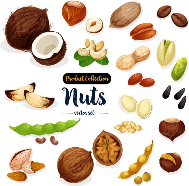 nüssen, samen, bohnen cartoon symbolsatz für food-design - nuss stock-grafiken, -clipart, -cartoons und -symbole