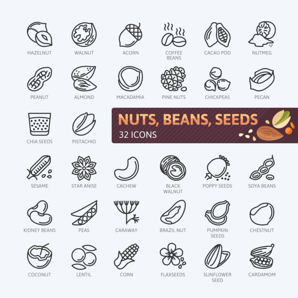 ilustrações de stock, clip art, desenhos animados e ícones de nuts, seeds and beans elements - simple vector icon collection. - amendoas