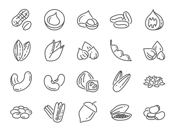 nuts, seeds and beans icon set. included icons as basil, thyme, ginger, pepper, parsley, mint and more. - nuts stock illustrations
