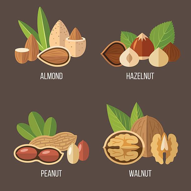 orzechy zestaw - nuts stock illustrations