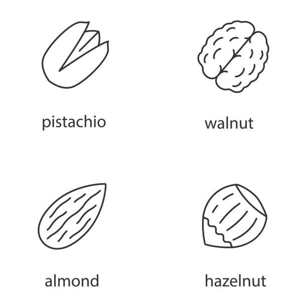 muttern arten symbole - nuss stock-grafiken, -clipart, -cartoons und -symbole