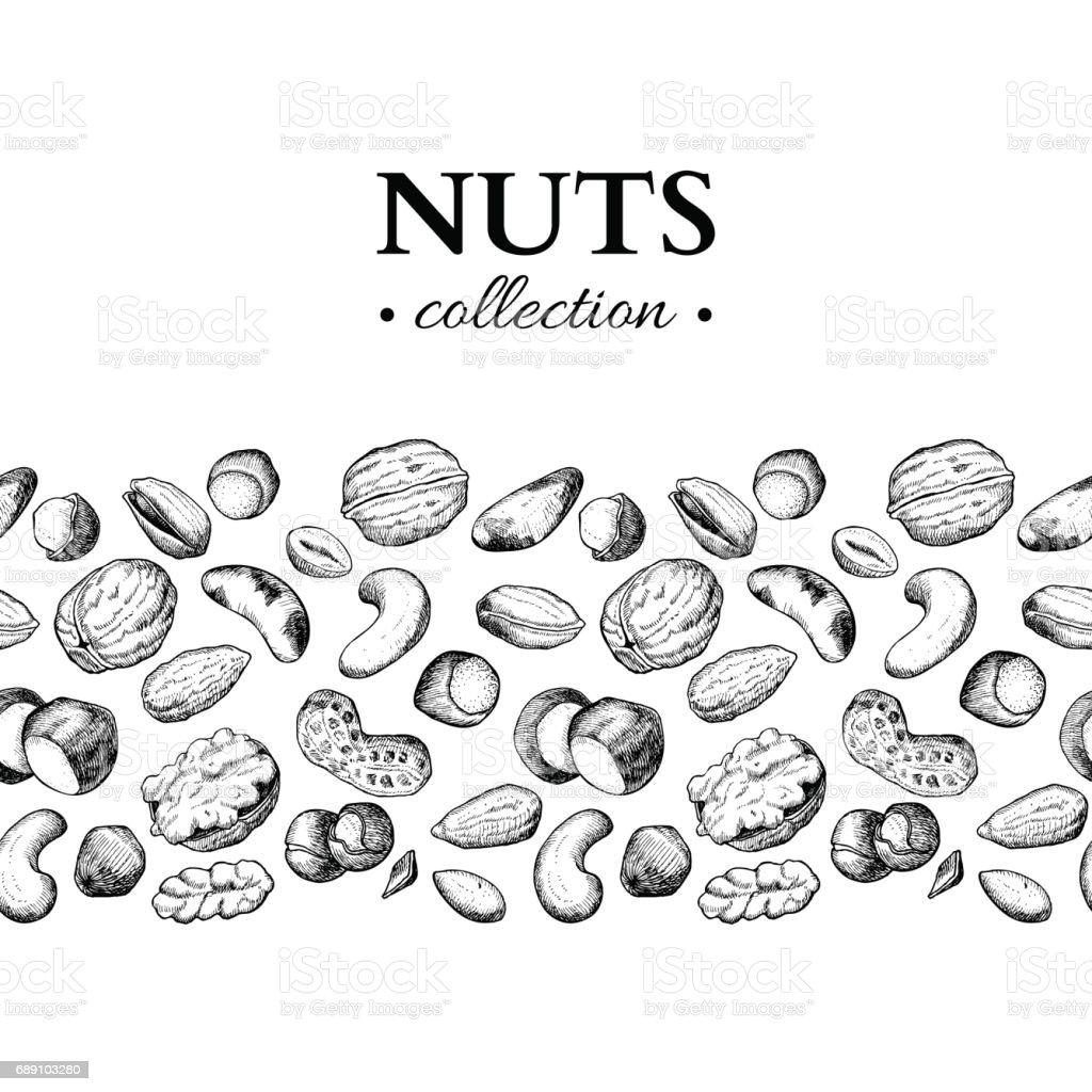 Nuts vector vintage illustration. Hand drawn engraved food objects. vector art illustration