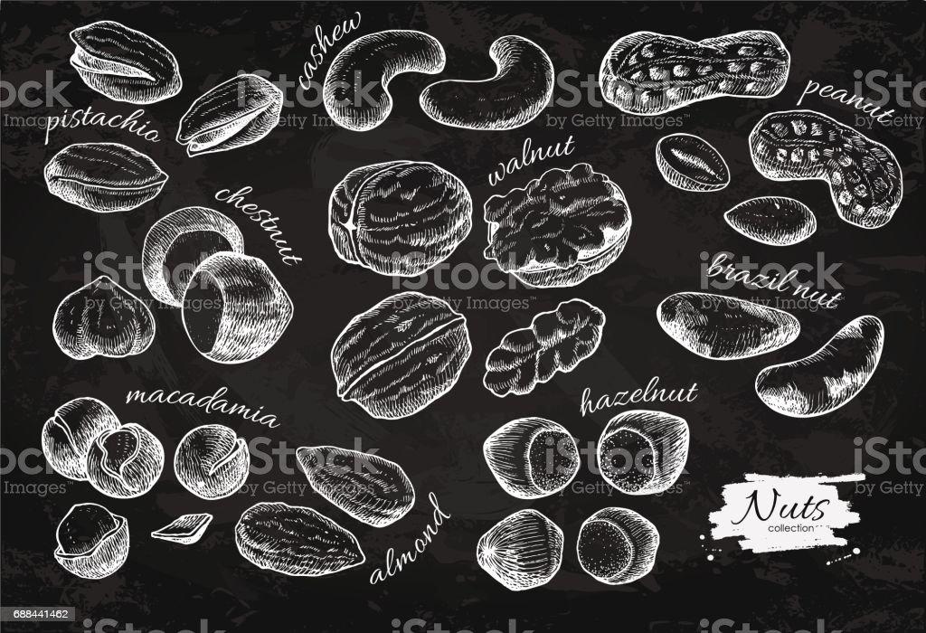 Nuts vector vintage illustration set. Hand drawn engraved objects on chalkboard background. vector art illustration