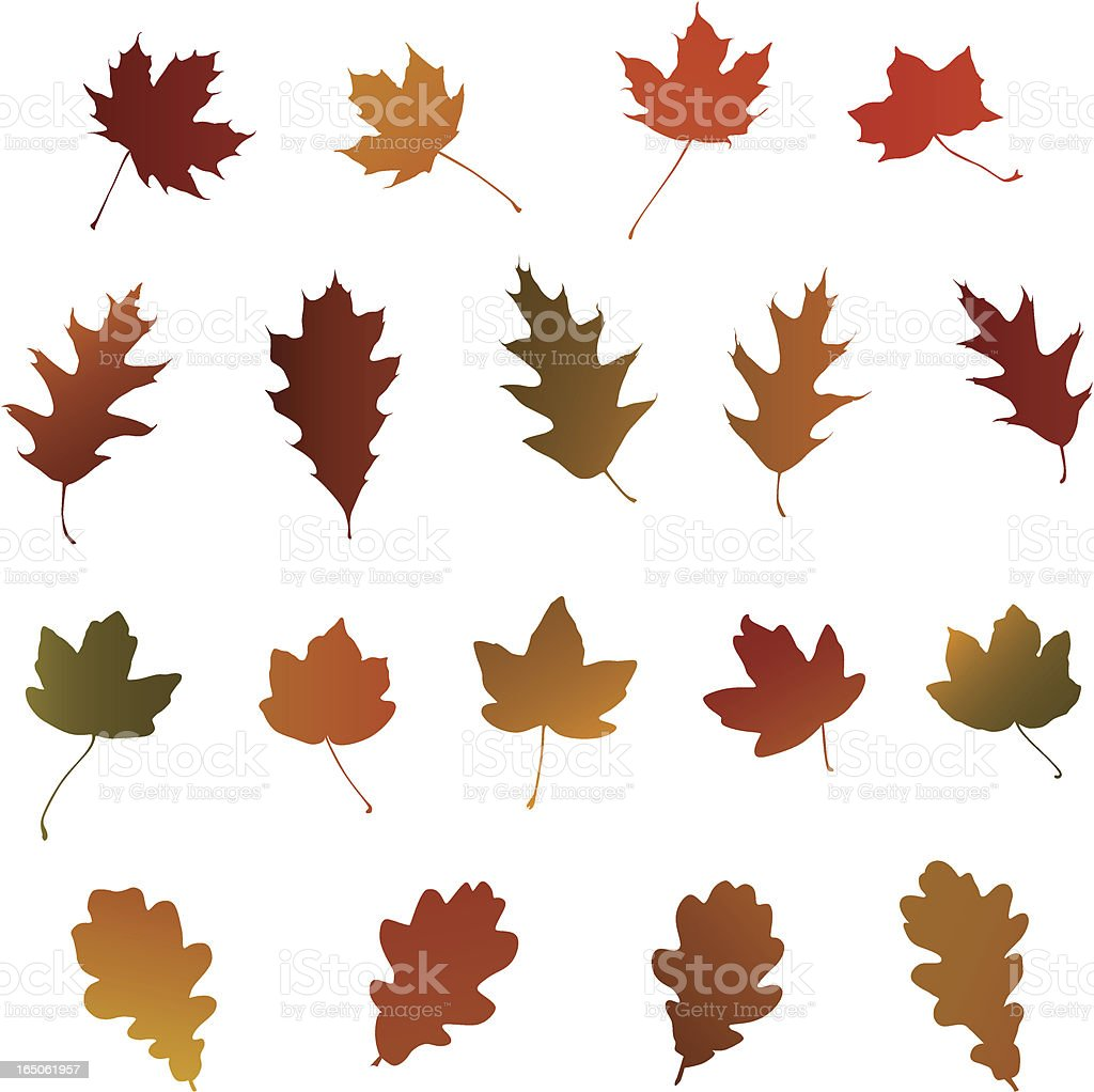 Oak and Maple Autumn Leaves. royalty-free stock vector art