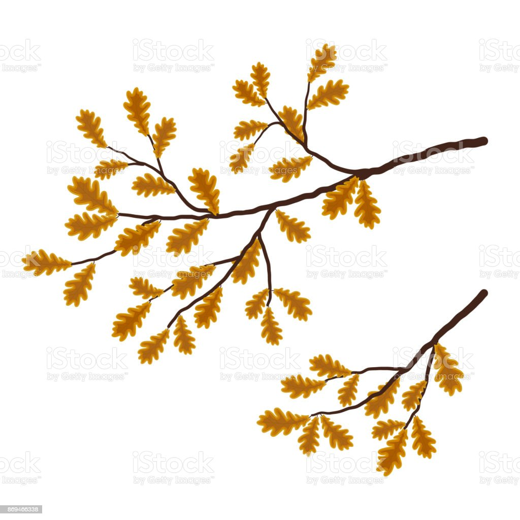Oak branch on a white background vector art illustration