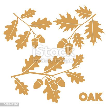 Vector illustration Oak branch set on white background