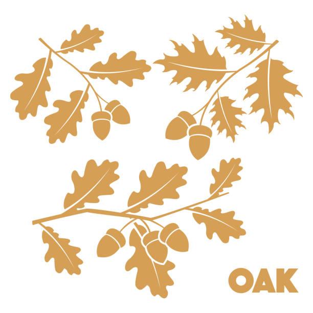 Oak branch set Vector illustration Oak branch set on white background oak leaf stock illustrations