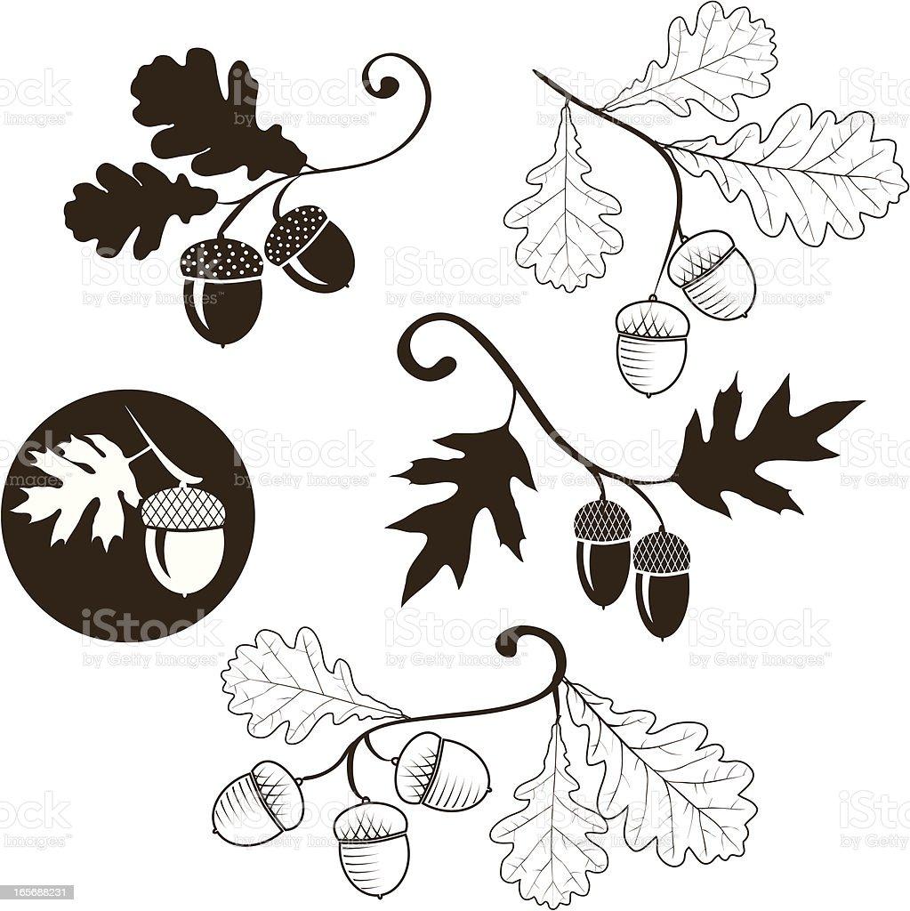 Oak branch vector art illustration