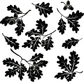 Oak branches with acorns, silhouettes