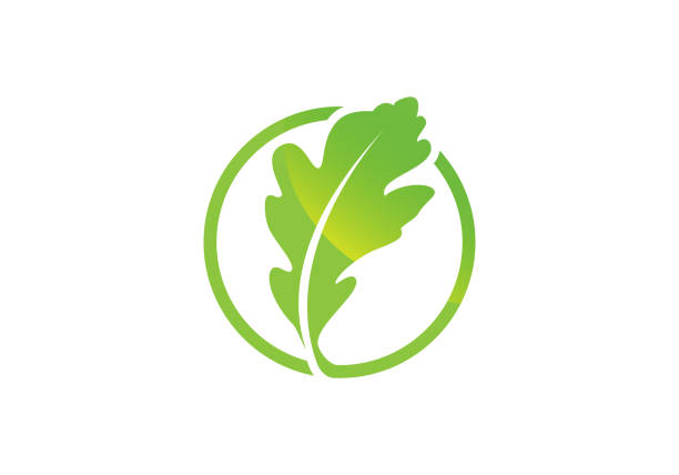 Oak leaf icon Green color in a circle vector illustration. Oakleaf icon Green color in a circle vector illustration. oak leaf stock illustrations