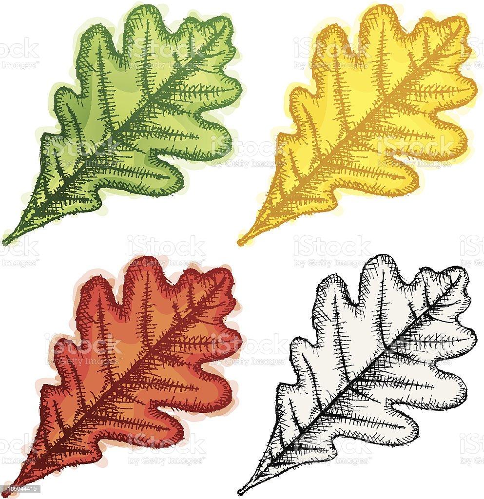 Oak leaf vector art illustration