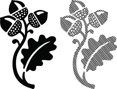 Oak leaf with acorns illustration