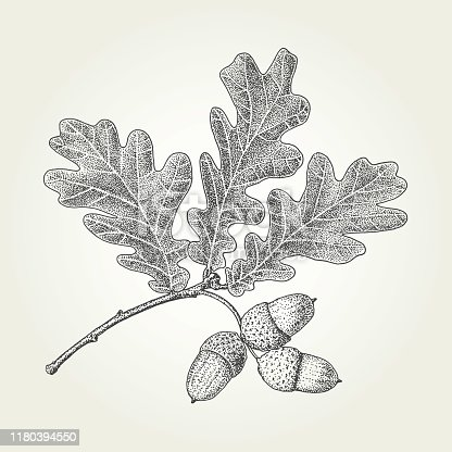 Autumn vintage vector engraved illustration