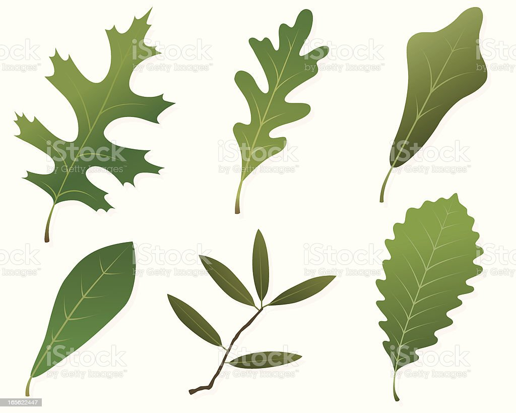 Oak Leaves Assortment royalty-free stock vector art