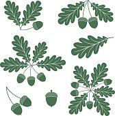 Oak leaves with acorns in green