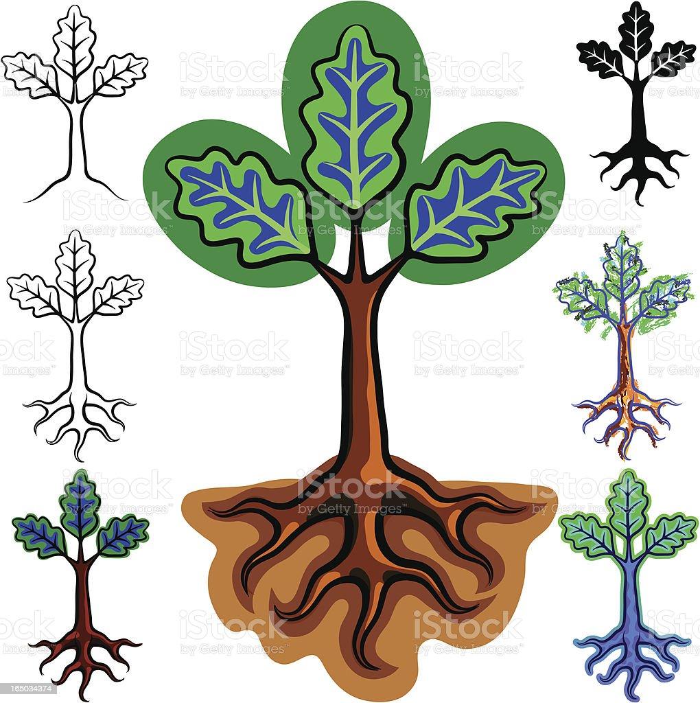 oak seedling royalty-free stock vector art