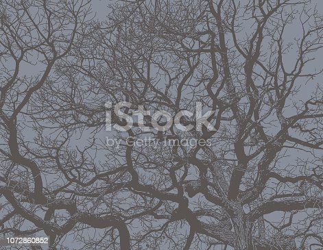 Engraving illustration of an Oak Tree and branches