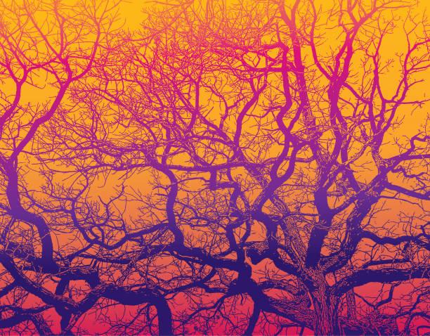 bildbanksillustrationer, clip art samt tecknat material och ikoner med ek träd och grenar med levande färger - stillsam scen