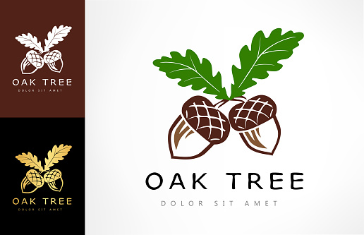 Oak Tree Logo Acorn Vector Stock Illustration - Download Image Now