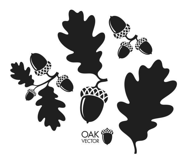 Oak tree. Silhouette. Isolated acorns and leaves on white background Vector illustration (EPS) oak leaf stock illustrations