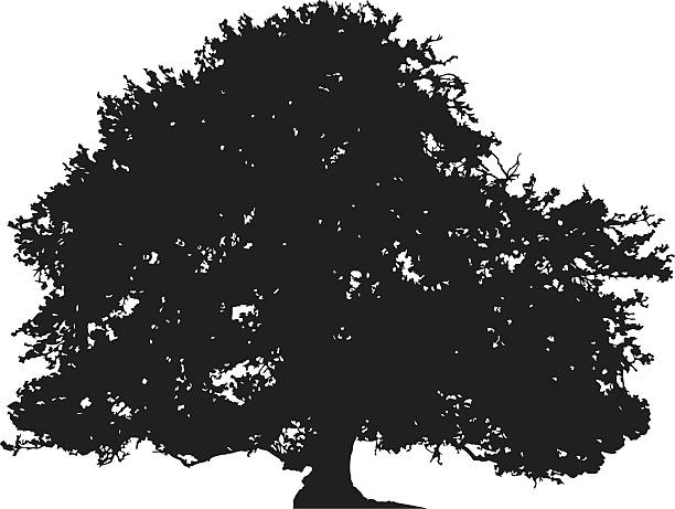 Oak tree silhouette vector vector art illustration