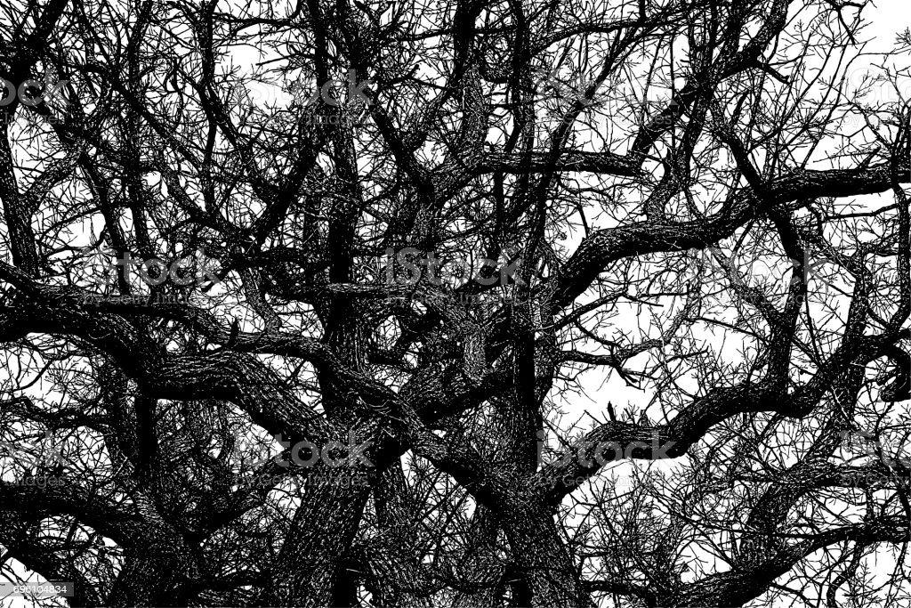 Meşe Ağacı Dokulu Arka Plan Deseni Stok Vektör Sanatı Abdnin Daha