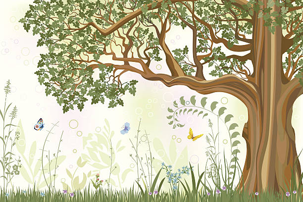 illustrazioni stock, clip art, cartoni animati e icone di tendenza di quercia - farfalla ramo