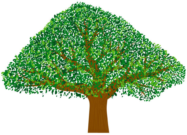 Oak tree with green leaves vector icon vector art illustration