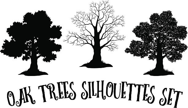 Royalty Free Oak Tree Clip Art, Vector Images ...